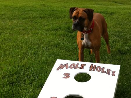 Macy and the Mole Holes Game